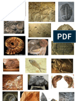 fossils pic