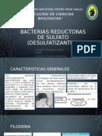 Bacterias Reductoras de Sulfato (Desulfatizantes)