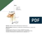 Resumen Anestesia
