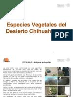 Especies Vegetales Del Desierto Chihuahuen