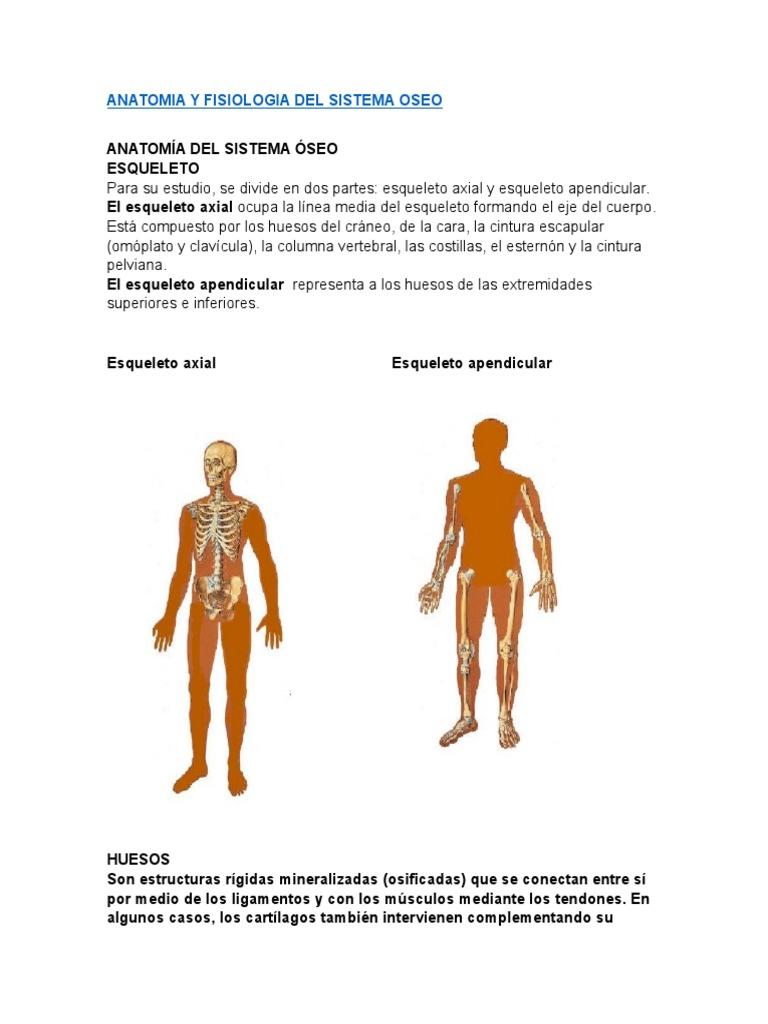 Excelente Anatomía De Las Extremidades Imagen - Imágenes de Anatomía ...
