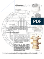 9.- Articulaciones de La Columna Vertebral