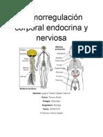 Termorregulación Corporal Endocrina y Nerviosa