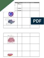 cell function worksheet