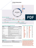 Map and Features of PJET1