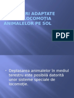 Structuri adaptate pentru locomoția animalelor pe sol.pptx