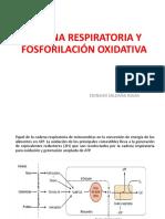 004 Cadena Respiratoria y Fo.r. y f.o