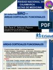 8 CerebroIII AreasCorticalesFuncionales 2016