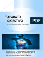 Aparato Digestivo Morfologia II