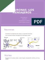 Neuronas.pptx