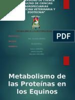 metabolismo-proteina-equinos
