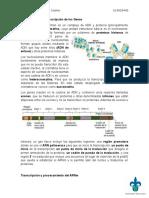 Introducción a La Transcripción de Los Genes