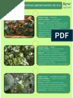 Ficha de plantas importantes de Ica.pdf