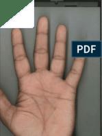 l. Hand Print