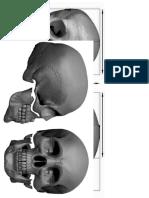skull reference.docx