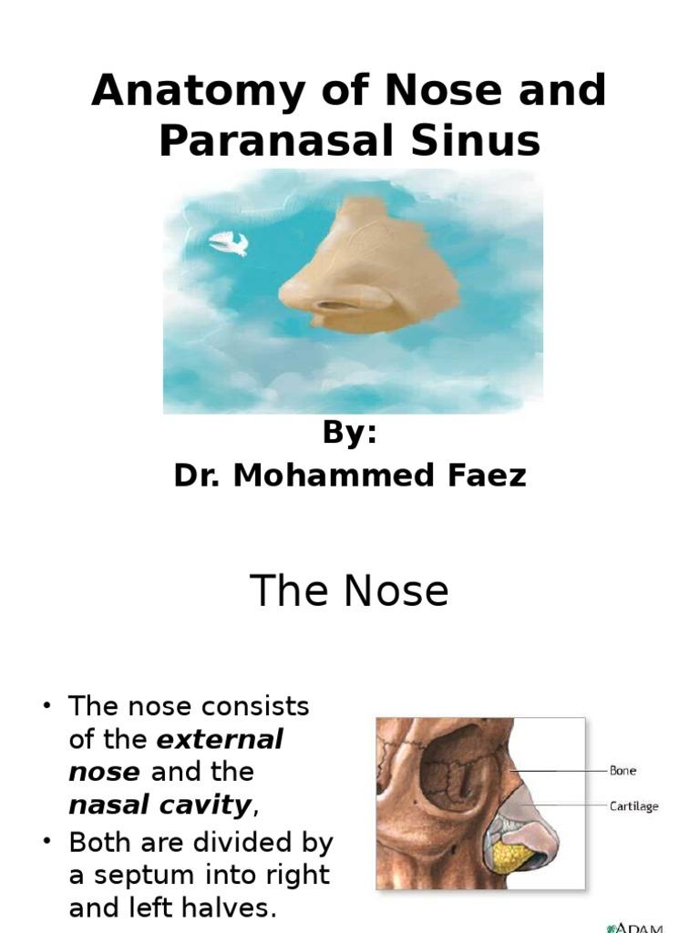 Anatomyofnoseandparanasalsinus 100616084243 Phpapp02 Human Nose