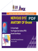 Nervous System Anatomy of Brain