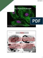 Clase 9-10. Núcleo y Replicación ADN (1)