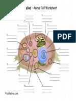AnimalCellModel.pdf