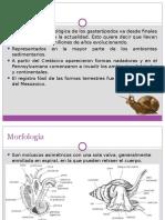 Gasteropodos
