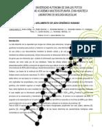 adn genómico humano.docx