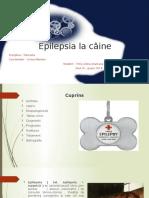 Epilepsia La Câine