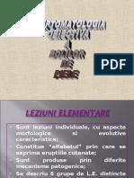 LP Leziuni Elementare