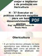 C   8 H - 37 Olericultura.ppt