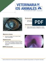casos clinicos avepa.pdf