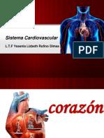S. Cardiovascular.pdf