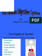 v10CR SMART Simple Organs of the Digestive and Excretory System Upper Grades
