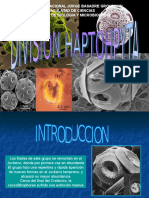 Presentacion de Haptophyta