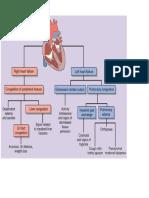 Congestive Heart Failure (Pathophysiology)