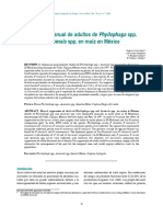 Supresion Manual de Adultos de Phyllophaga Spp y Anomala Spp en Maíz en México