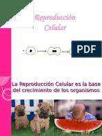 Ppt Reproduccion Celular