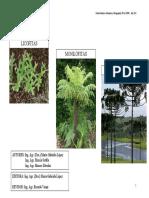 2 Licofitas Monilofitas Pinofitas