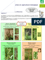 4 Pages Rumex