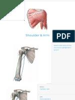 shoulder-and-arm-v3.pdf