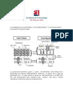 Aclaraciones Sobre Pared Bacteriana y Micobacteriana