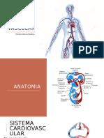 Sistema Cardio Vascular 1