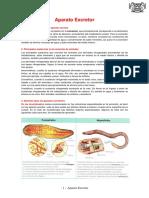 Aparato-escretor.pdf