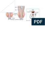 Kelenjar Paratiroid.docx Nila
