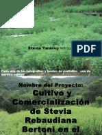 ProyectoStevia Yaracuy San Felipe Fotos 2017