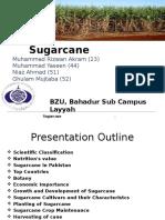sugarcanepptx2-160114124742