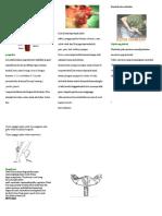 152601657-Leaflet-Kista-Ovarium.doc