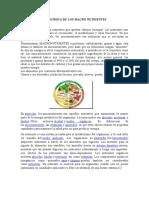 Bioquímica de Los Macro Nutrientes