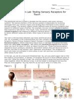 sensory receptors lab