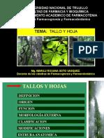 Tallo y Hoja por. Q.F. Marilú Roxana Soto Vásquez
