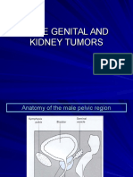Male Genital and Kidney