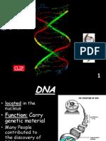 dna-transcription-translation-mutations hh-after  1